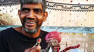 Sunil's fantastic dolls